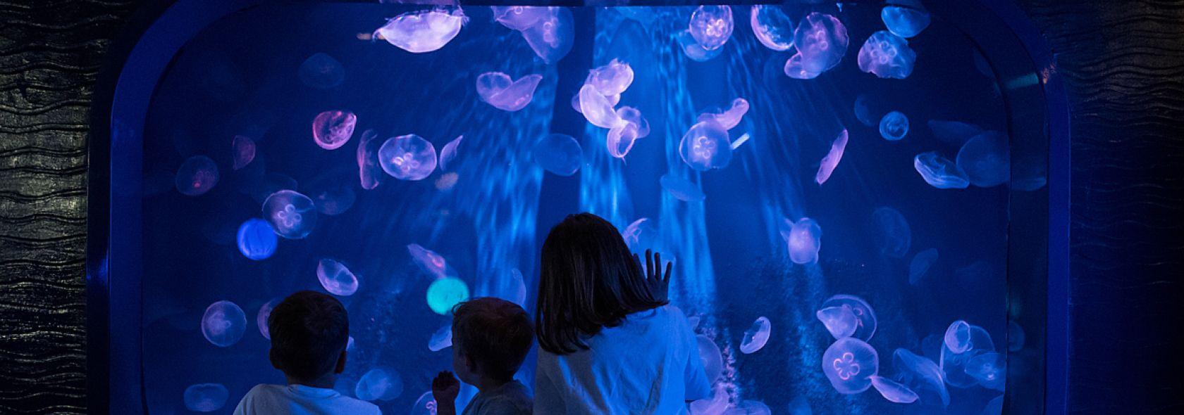 Acquario di Genova - sala meduse