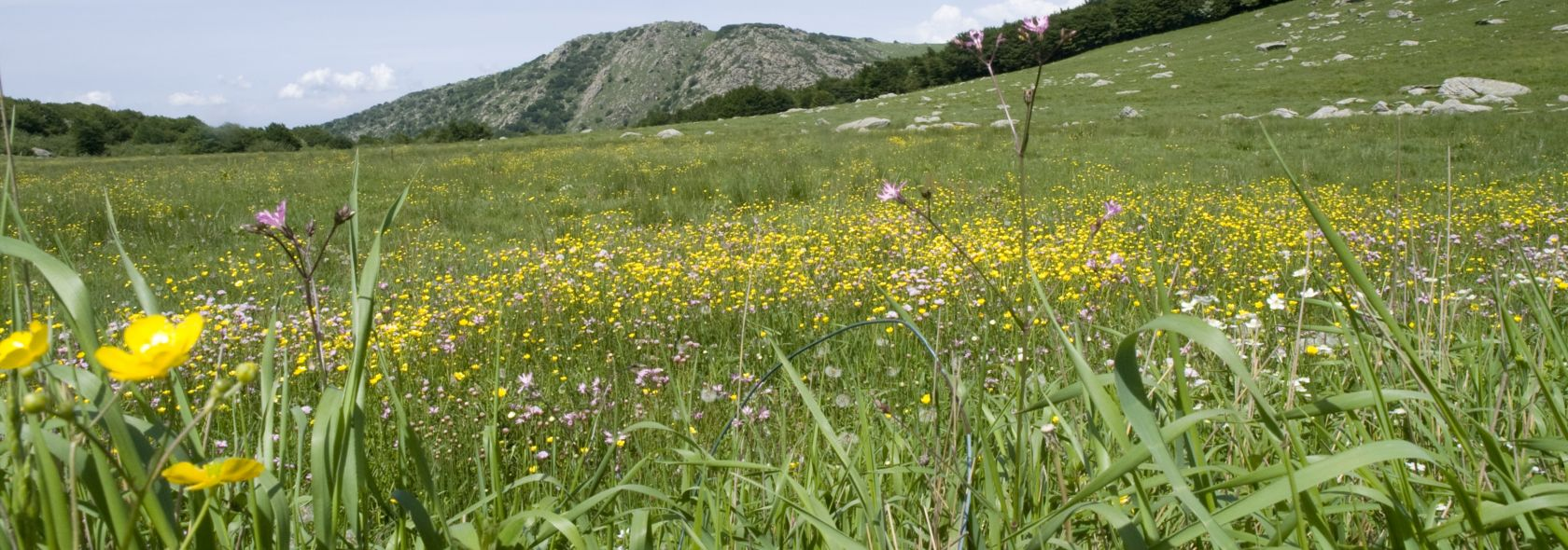 fioriture parco del Beigua