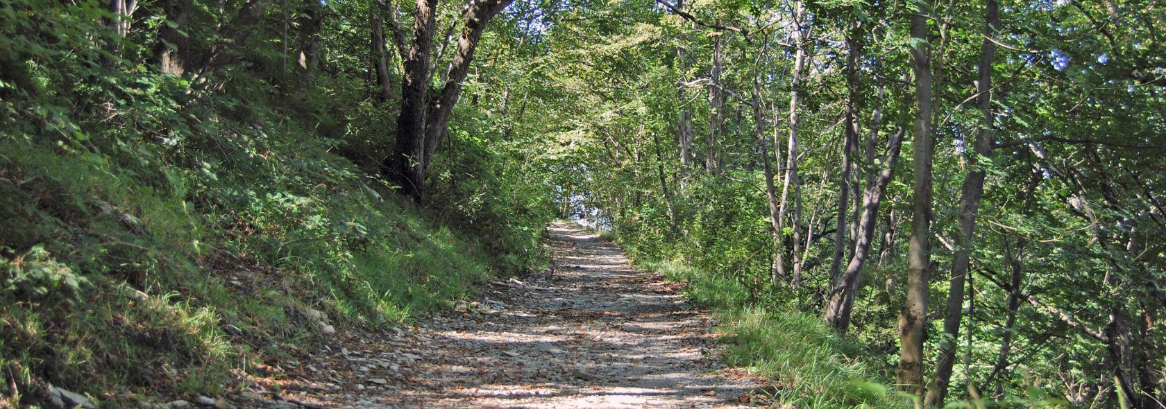 Il sentiero fra Forte Sperone e Forte Puin - Archivio Ufficio Parco Urbano delle