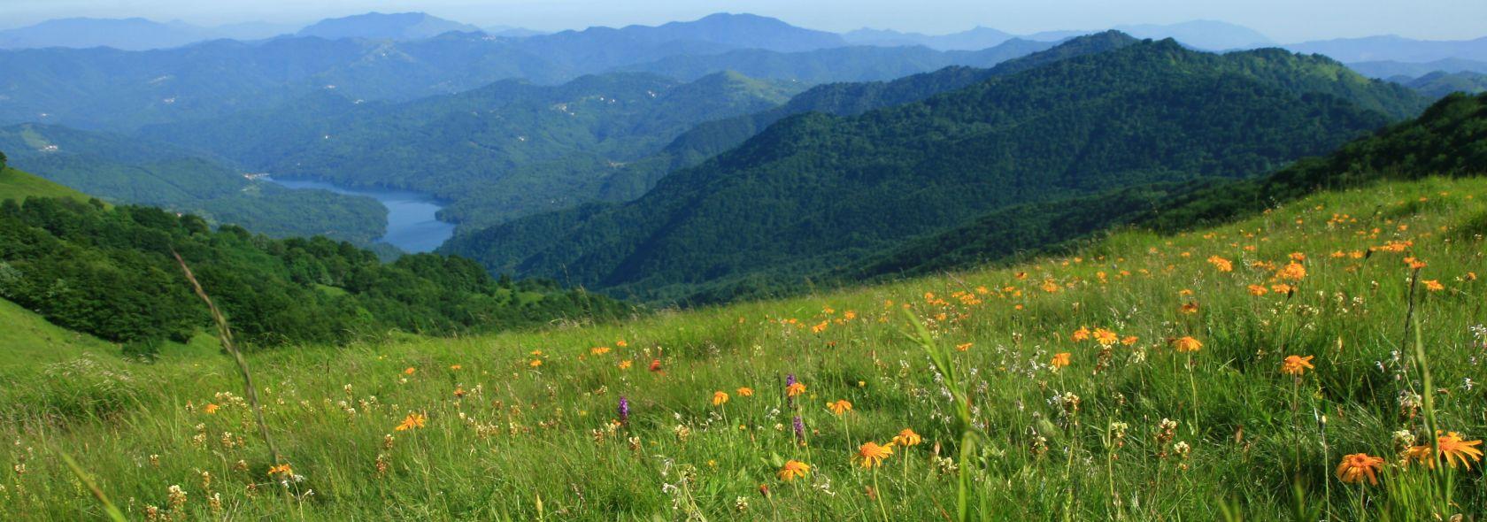 M.Antola vetta con fioritura Arnica montana e sullo sfondo il Lago Brugneto_ Fot
