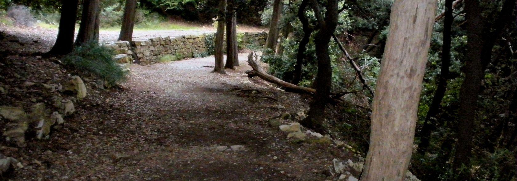 Bosco dei Frati Minori del Santuario di Nostra Signora del Monte - foto: BBruno