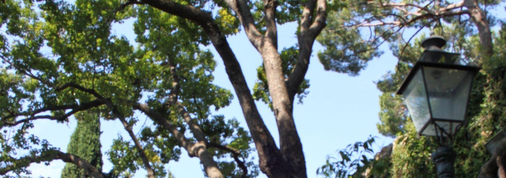 Villetta di Negro - alberi monumentali
