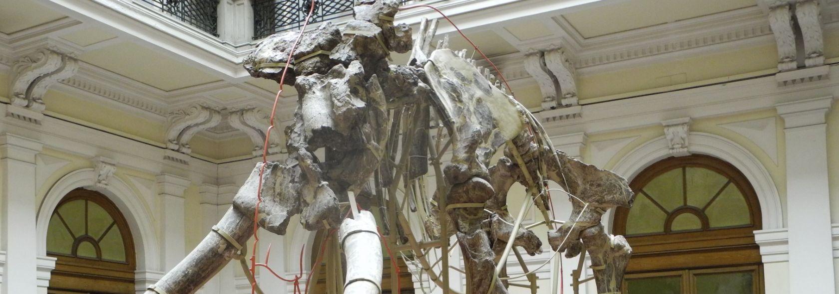 Museo Doria - Elefante italico