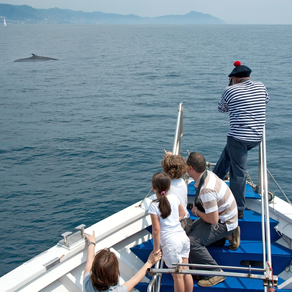 Swimming Cetacea - speedboat excursions - Merlo ph