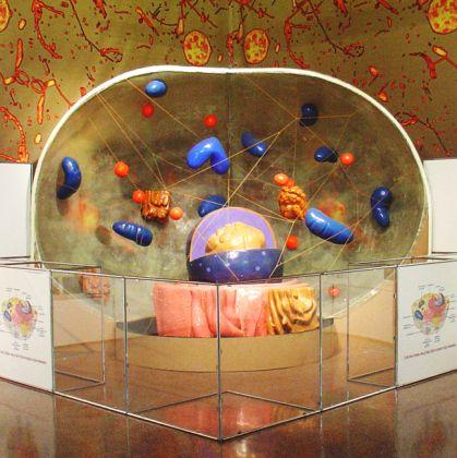 Museo Doria - Sala della cellula