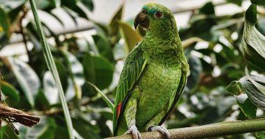 Censimento pappagalli