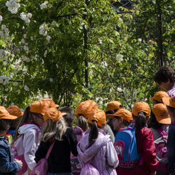 Bambini nel verde
