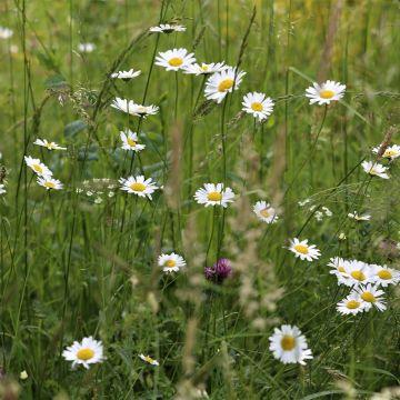 Fiori ed erbe selvatiche