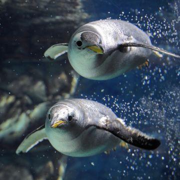Acquario di Genova - pinguini - PH Merlofotografia