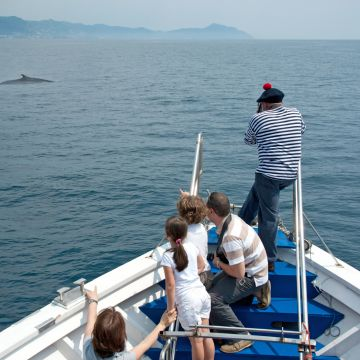 Swimming Cetacea - escursioni in gommone - foto: Merlo