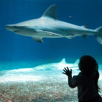 Acquario di Genova - squali