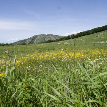 Fioriture sul monte Beigua -  foto E.Monaci