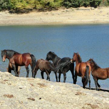 Horsewatching foto E.Isola