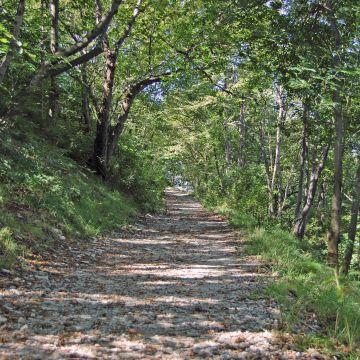 Il sentiero fra Forte Sperone e Forte Puin - foto:  ©Archivio Ufficio Parco Urba