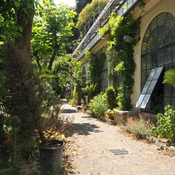 Orto botanico Corso Dogali (Università) - foto: Goggi - ©genovacittadigitale