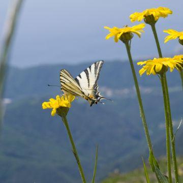 Alta Via: fioriture sul  Monte Beigua - foto E. Monaci