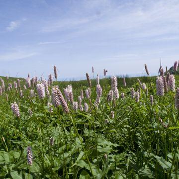 fioriture Alta Via Monte Beigua - foto E. Monaci