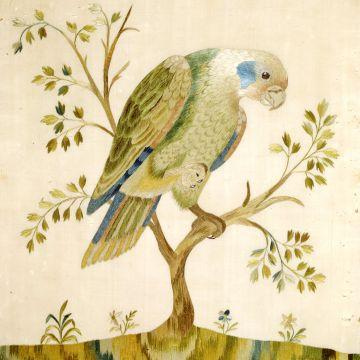 DVJ Damasco Velluto Jeans - pappagallo